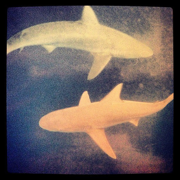 What I Learned By Swimming With Sharks