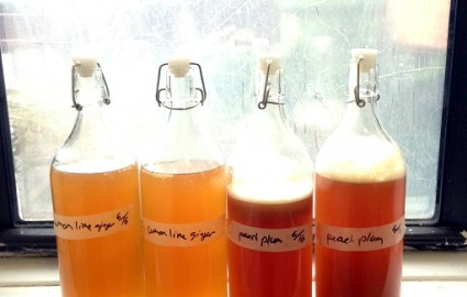 Beginner's Guide to Kombucha Part 2: Step by Step instructions