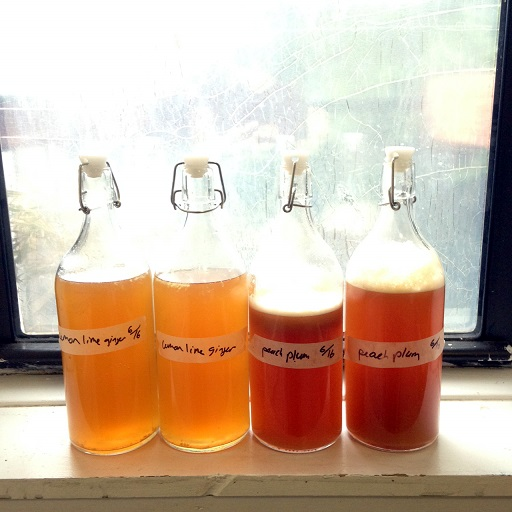 Beginner's Guide to Kombucha: Part 2