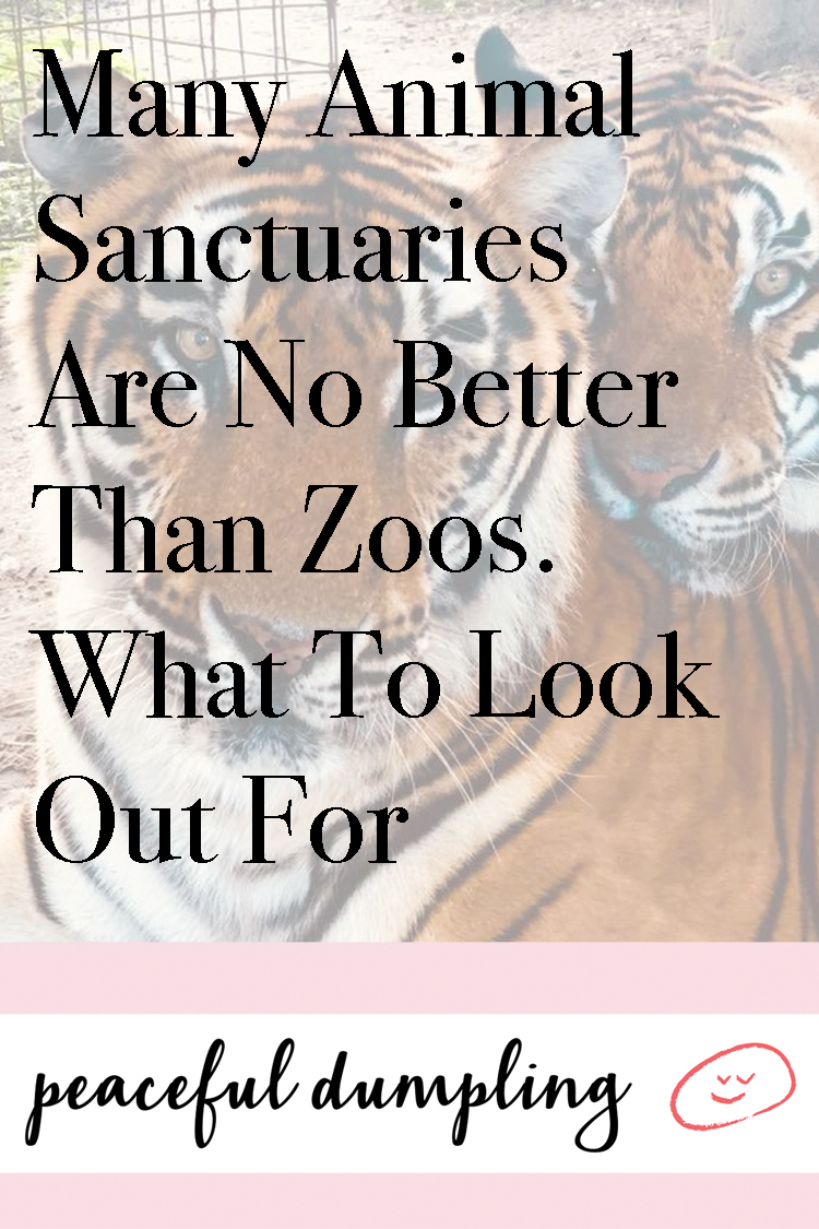 Many Animal Sanctuaries Are No Better Than Zoos. What To Look Out For