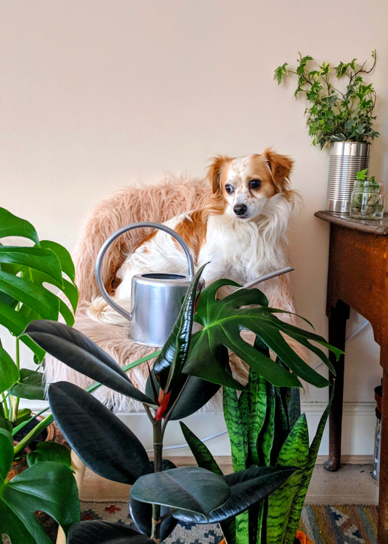 my dog nacho with air purifying plants