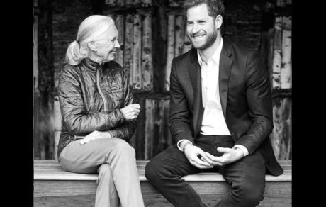 Let This Delightful Prince Harry Interview Of Dr. Jane Goodall Wash Over You