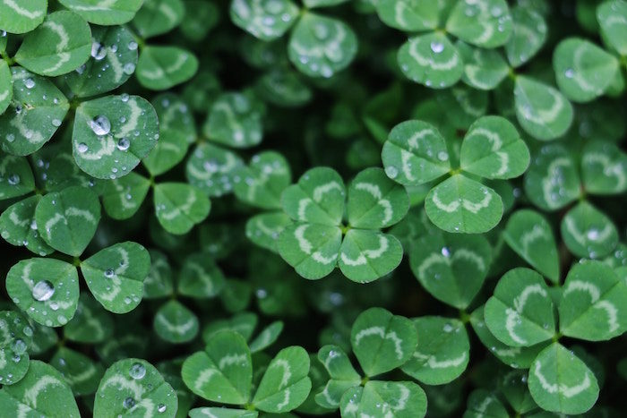 Lucky four leaf clover - how going outside the comfort zone makes you luckier