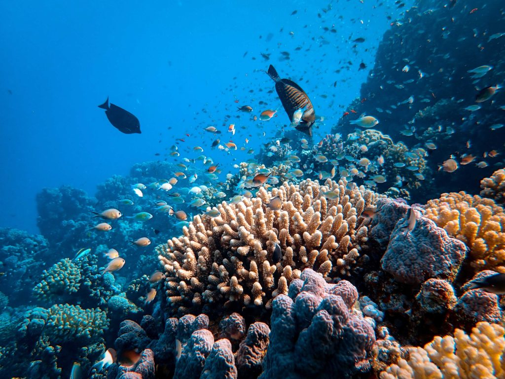 Fish swimming above coral reef